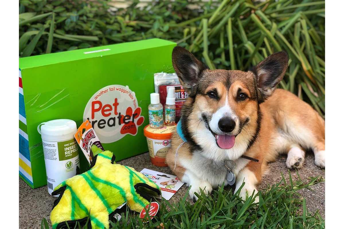 Happy corgi posing next to Pet Treater Box, with all items displayed outside the box.