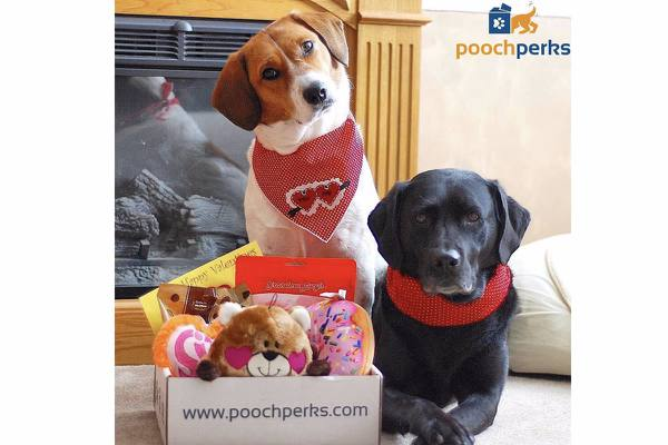 ce2d63a3 Pooch Perks | Customized Monthly Dog Subscription Box | Cratejoy