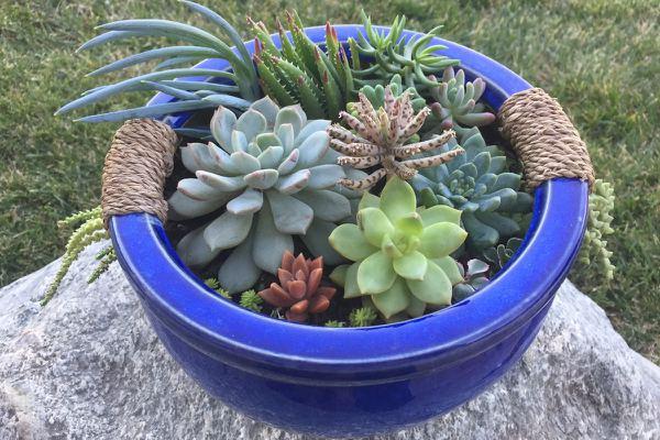 Succulent Lovers monthly subscription box image of a succulent arrangement planter