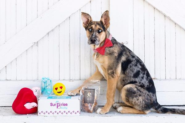 Photo for Box Insider article 2 Subscription Boxes to Celebrate National Dog Day