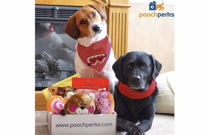 Pooch Perks Premium Customized Dog Boxes Photo 2